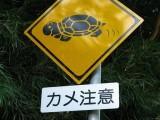 道路標識:カメ注意