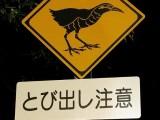 道路標識:ヤンバルクイナとび出し注意