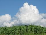 もくもく入道雲
